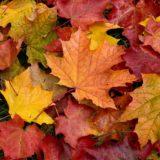 La Natura ci aiuta. Autumn Leaves, un'essenza ricavata dalle foglie cadute